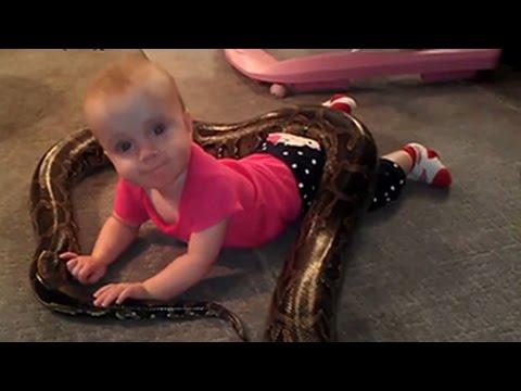 Niedlichen Babys spielen mit Tieren Kompilation 2014