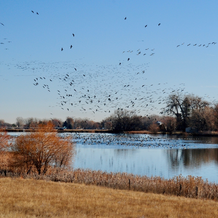 Geese flying over Dodd Reservoir