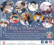 Teddy's Winter Camp