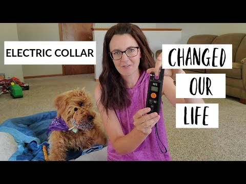 Top 8 Best Dog Training Collars 2019 Reviews • ProductsMansion
