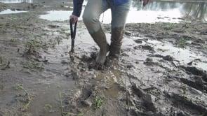 Mudplay at the riverbank