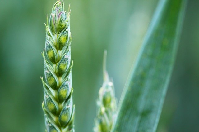 Climate-change-resistant agriculture
