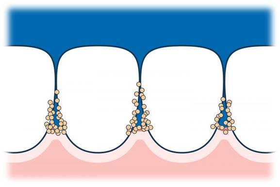 Easiest Ways To Clean Between Your Teeth