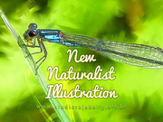 New Naturalist Illustration