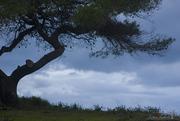 Καϊάφας-Ηλεία