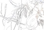 Nest JAG detail