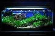 My Aquarium plant tank Design