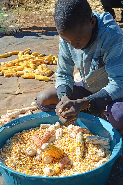 Extreme weather leaves 45 million in Southern Africa facing severe food shortages