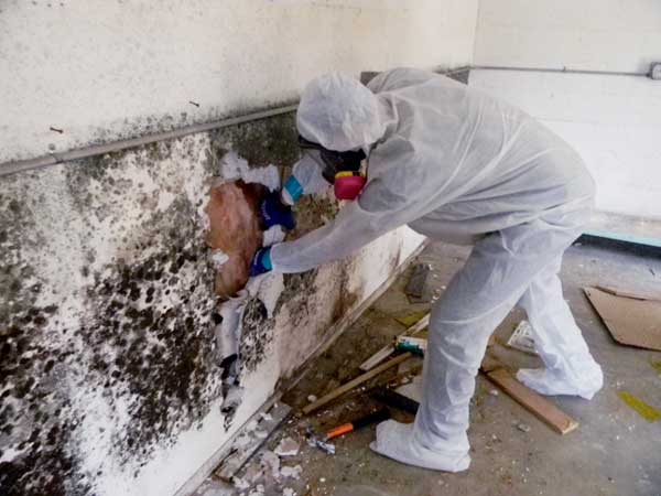 MOLD REMEDIATION WITH AMERICAN RESTORATION 24/7