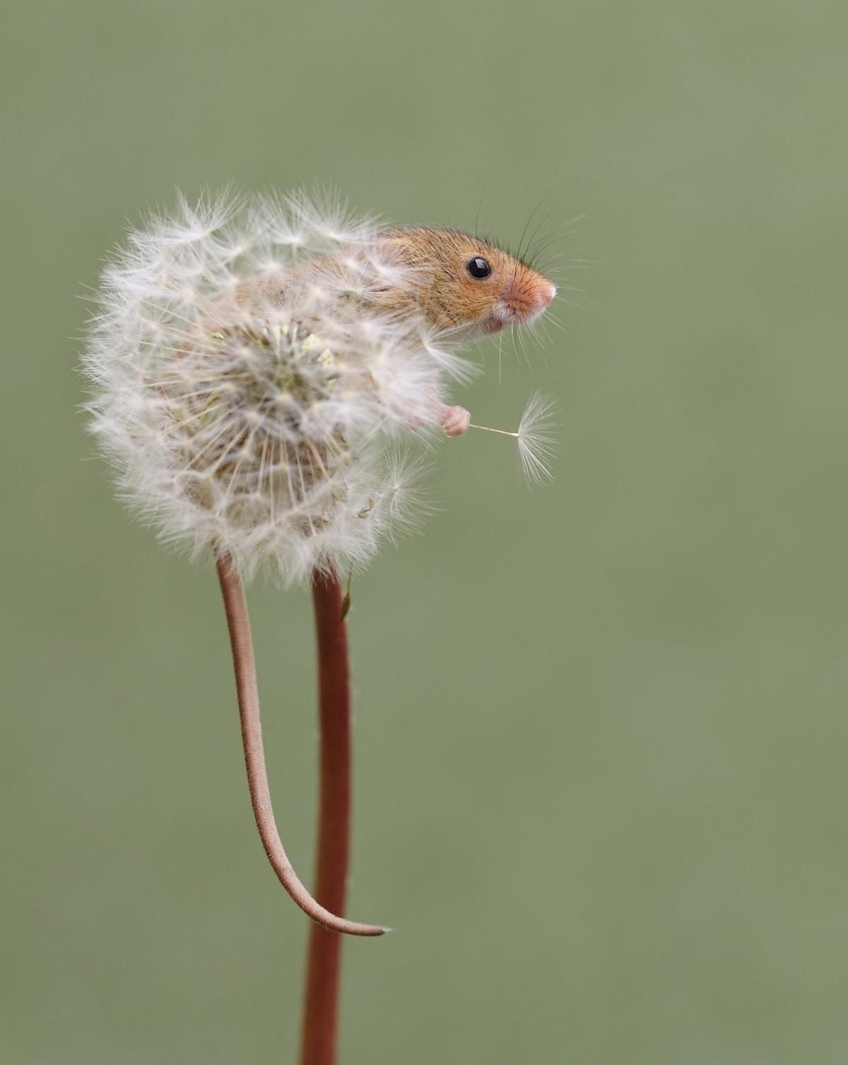 ვირთხა, თაგვი, ფოტოგრაფია, ბლოგი, Qwelly