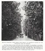 NGM 1920-01 Pic 11