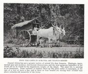 NGM 1920-01 Pic 12