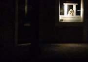 Night prowling 2