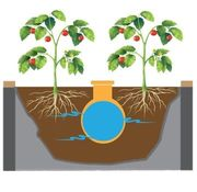 Best Irrigation Methods For Our Climate