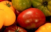 The Great Tomato Plant Sale