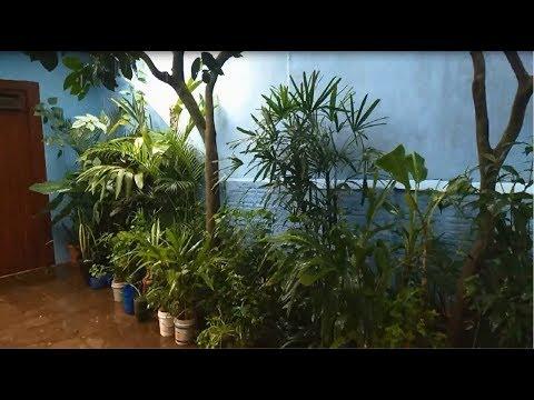 CHUVA DE JANEIRO DE 2020