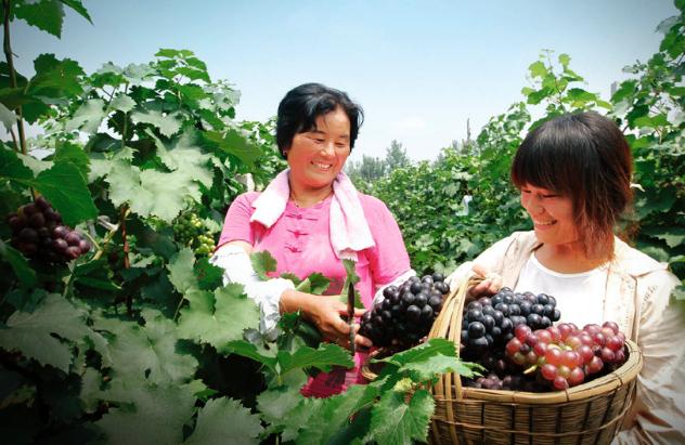 Diferentes momentos de la producción del vino 葡萄酒酿制的各道工序