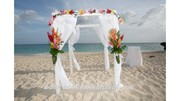 Semi-Tropical Beach Canopy
