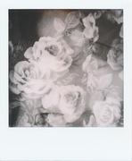 flowers me