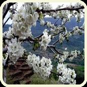 FIN DE SEMANA: VALLE DEL JERTE. DEL 27 AL 29 DE MARZO