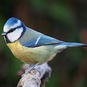Big Garden Birdwatch in the Gardens Community Garden (GRA)