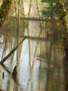 Fulford Creek Genesis