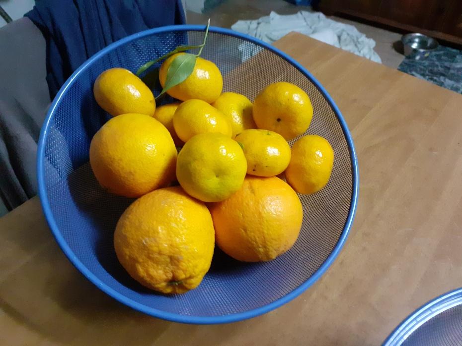 Mandarinen und Orangen