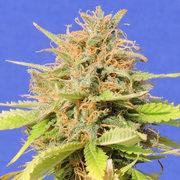 Listing Cannabis Discounts & Deals Since 2013!