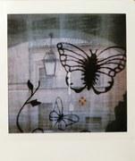 Farfalle nella nebbia