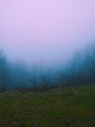 The Mist at Elkmont