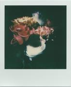 Impressione di fiori