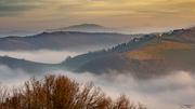 Fog in golden hour_rid_forum