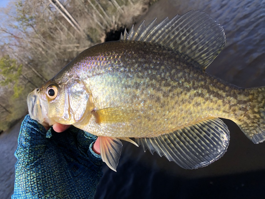 Cold Water Black Crappie.....2/17/2020