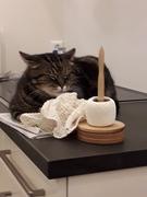 Katzengardine