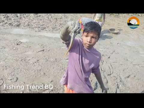 Catching Fish By Hand   Traditional Mud Fishing   Mud Fishing