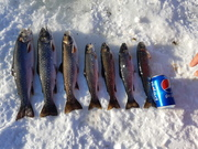 Nice run of trout. First feed the winter.