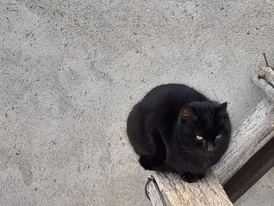 ეს ისეთი კატა არაა, ყველას კუდი აუსვას