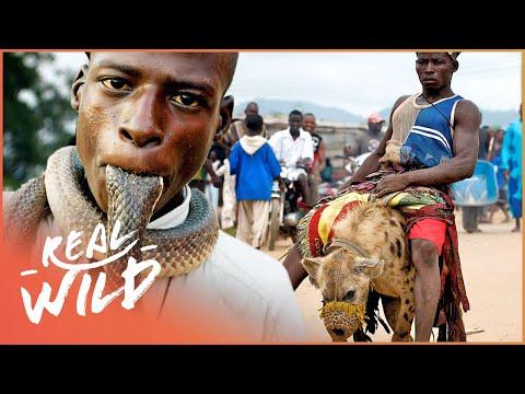 The Mysterious Animal Gangs Of Nigeria | Hyena Men | Real Wild
