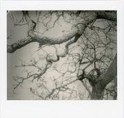 Gli alberi sono liriche che la terra scrive sul cielo