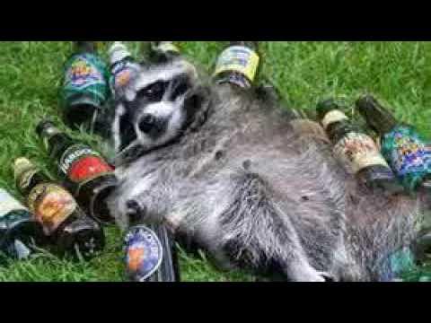 im a beer slut
