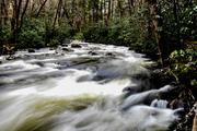 Porters creek, 3-13-20