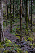 Porters Creek trail, 3-13-20