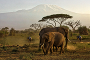 Africa Wildlife Safaris - Kenya