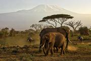 Africa Wildlife Safaris - Kenya