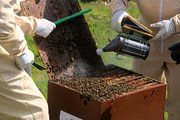 Hive Gadgets That work.