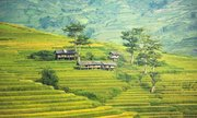 Bali's iconic rice paddies
