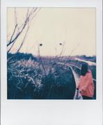 Orange Days (2)