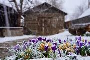 Spring in Boulder?