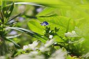 Fleurs des champs à Belgentier.