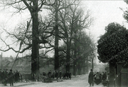 Elm Trees Being Felled in Bruce Grove, 1903